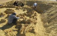 Whale Fossil Affirms Noah's Flood